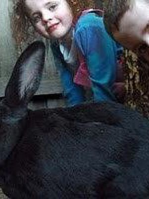 我的兔子Hoppy
