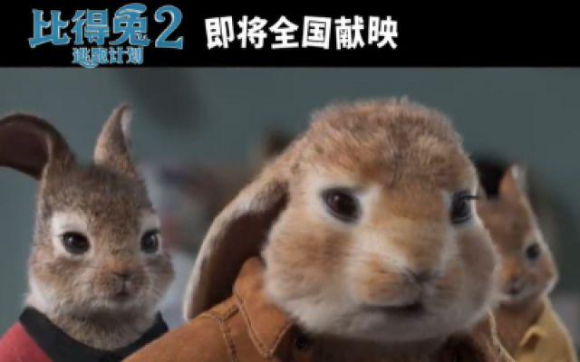 《比得兔2:逃跑计划》新预告:比得兔大闹婚礼