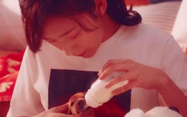 催泪!《再见汪先森》温情MV:你就是我的全世界