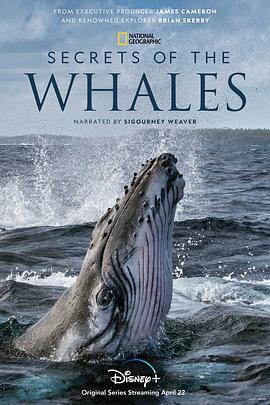 鲸鱼的秘密